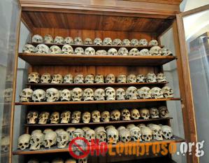 Teschi umani nel Museo di Antropologia criminale